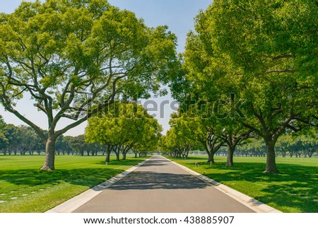 Massive green shade trees hang over an empty street in a park. - stock photo