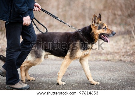 Master and his obedient (German Shepherd) dog - stock photo