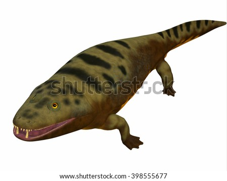 Mastodonsaurus Amphibian Body 3D illustration - Mastodonsaurus was an aquatic amphibian animal that lived in Europe during the Triassic Period. - stock photo