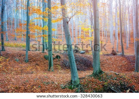 Matra forest touched by autumn - stock photo