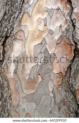 Mature Austrian pine bark abstract - stock photo