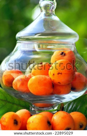 Mature  Loquats. - stock photo