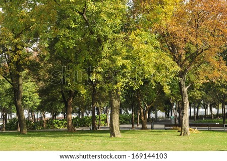 Mature trees in the park and green open space   - stock photo