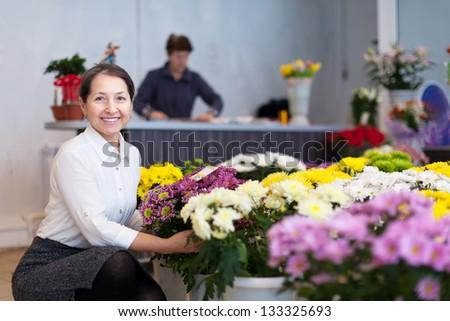 mature woman chooses chrysanthemum at flower store - stock photo