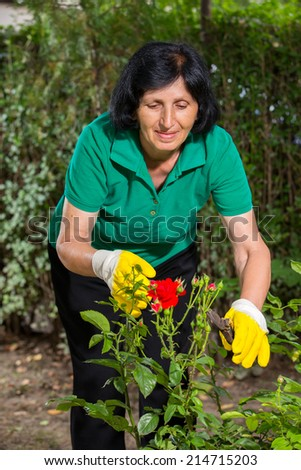 Mature woman cuts red roses in her garden using shears - stock photo
