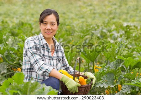 Mature woman harvesting ripe vegetables with basket containing zucchini and cucumbers. Lush green field in background.  - stock photo