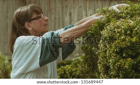 Mature woman trimming landscape shrubbery, image has retro treatment. - stock photo