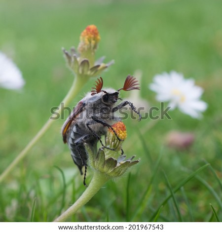 May bug - stock photo