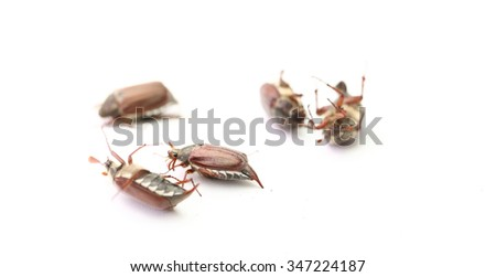 may-bug closeup isolated on a white background - stock photo