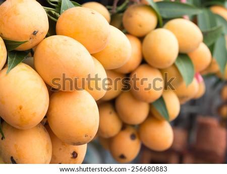 Mayongchid Maprang Marian Plum and Plum Mango thailand - stock photo