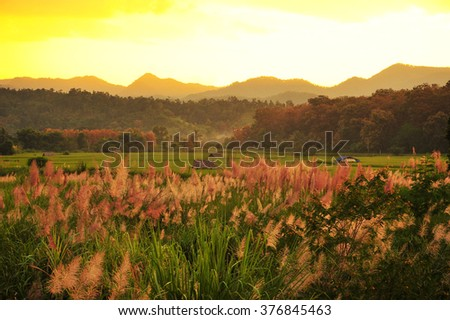 Meadow and Mountain - stock photo