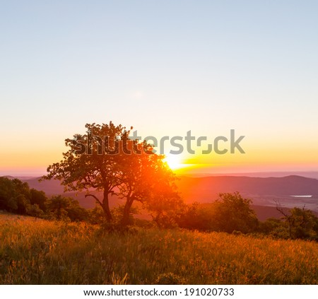 meadow at dawn - stock photo