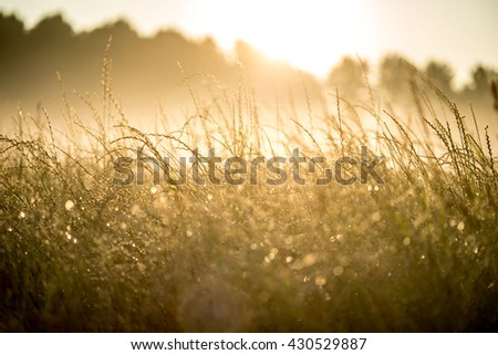 Meadow at dawn with mist and sun backlit - stock photo