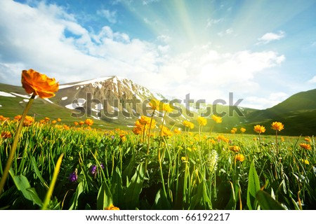 meadow at morning - stock photo