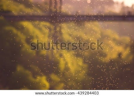 meadow at sunset. A swarm of midges over tall grass in front of the sun. Blurred background. Nature in the country. - stock photo
