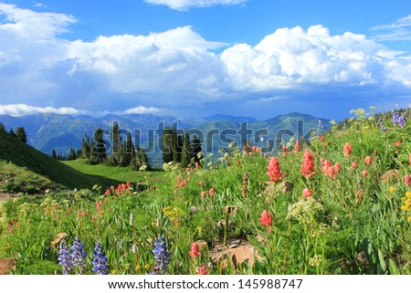 Meadow filled with wildflowers in the Utah mountains, USA. - stock photo