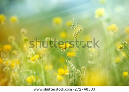 Meadow flowers lit by sun rays  - stock photo