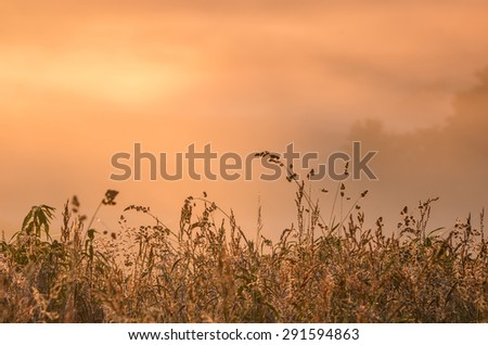 Meadow grass silhouettes with fog illuminated by the morning sun as a background  - stock photo