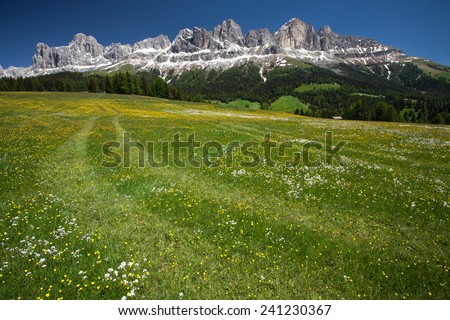 Meadow in front of the Rosengarten group in the Italian Dolomites. - stock photo