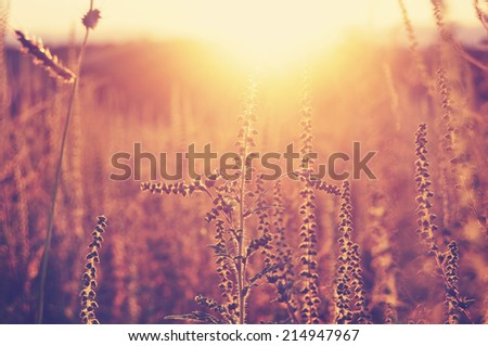 Meadow in the sunset golden light, meditative background - stock photo