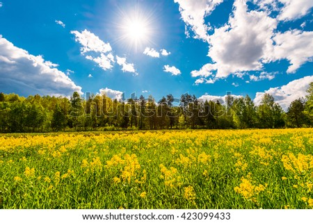 Meadow in the woods covered with yellow flowers on a cloudy spring day, the sun shines in the sky - stock photo