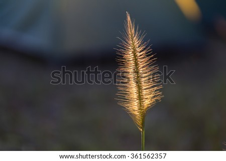Meadow isolate - stock photo