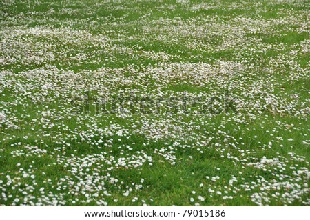 meadow of daisy and grass - stock photo