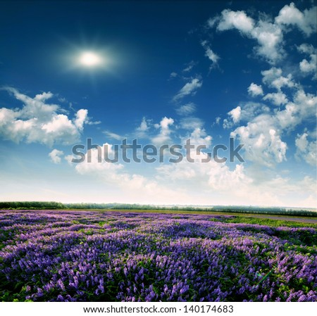 Meadow of lavender. Nature composition. - stock photo