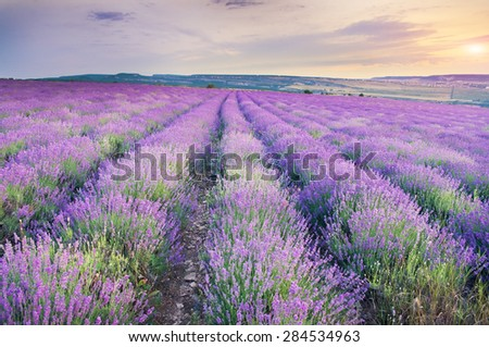 Meadow of lavender on sunset. Nature composition. - stock photo