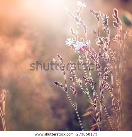 meadow summer flowers. Sunny vintage natural field background - stock photo