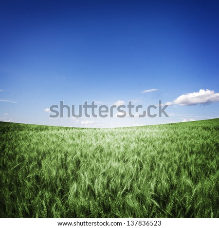 Meadow under blue sky - stock photo