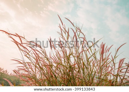 Meadow under blue sky with clouds. vintage tone - stock photo