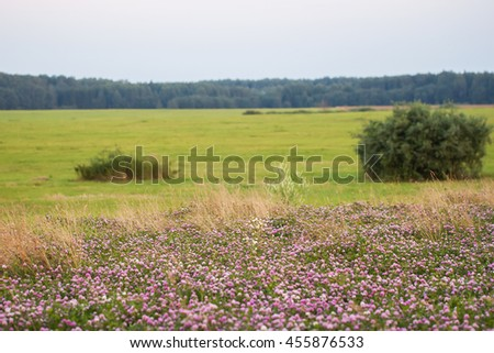 Meadow with blooming wild flowers - stock photo