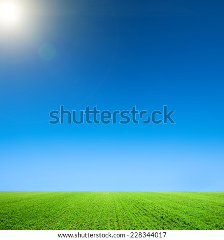 Meadow with green grass and blue sky - stock photo