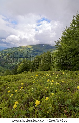 Meadow with yellow flowers in the mountains. Mountain landscape. - stock photo