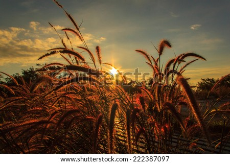 Meadows in the foreground and the sun in sunshine day in the background, edit warm tone - stock photo