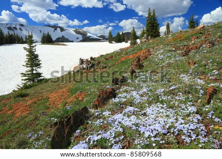 Meadows of wildflowers in the Snowy Range Mountains of Wyoming, USA - stock photo
