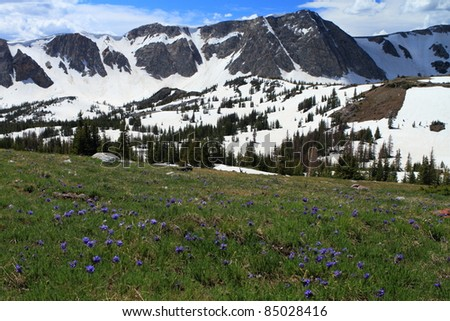 Meadows with wildflowers in the Snowy Range Mountains of Wyoming - stock photo