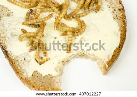 mealworm bread - stock photo