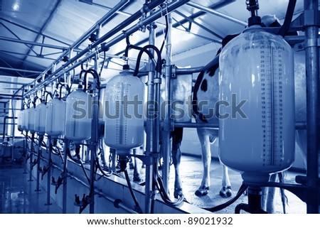 mechanized milking equipment in the milking hall - stock photo