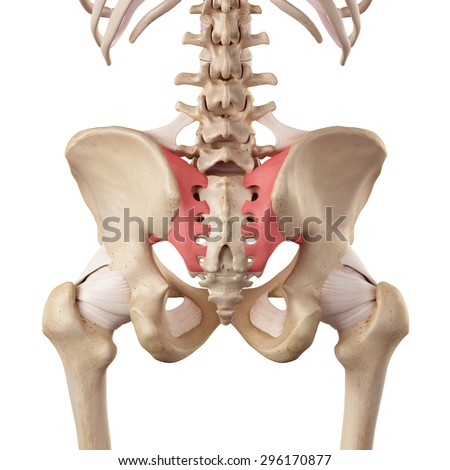 medical accurate illustration of the sacroiliac ligament - stock photo