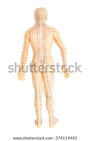 Medical acupuncture model of human  isolated on white background - stock photo
