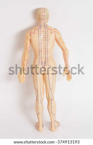 Medical acupuncture model of human  on white background - stock photo