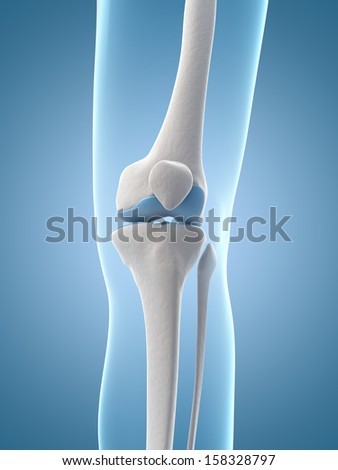 medical illustration of the knee - stock photo