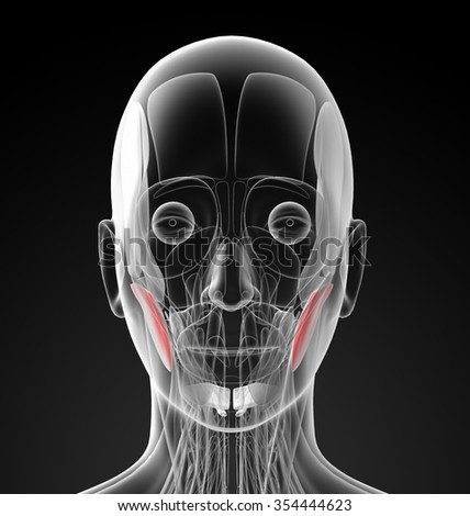 medical  illustration of the masseter - stock photo