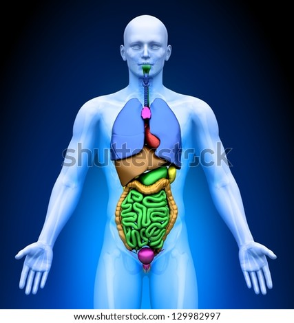Medical Imaging - Male Organs - stock photo
