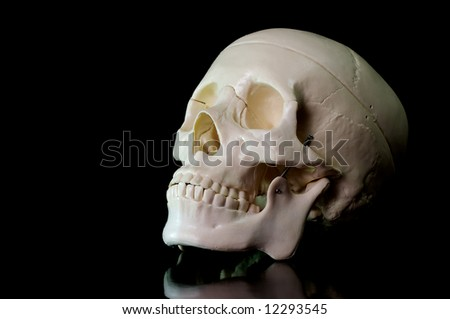 Medical learning skull laying on a black background - stock photo