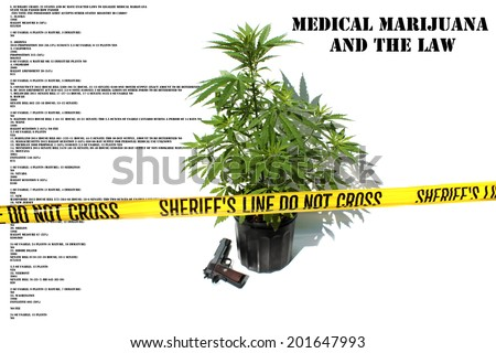 Medical Marijuana plant in a black plastic 1 gallon grow pot, isolated on white with room for your text. Marijuana aka Pot, Dope, Mary Jane, loco weed, etc. is an important plant on earth.  - stock photo