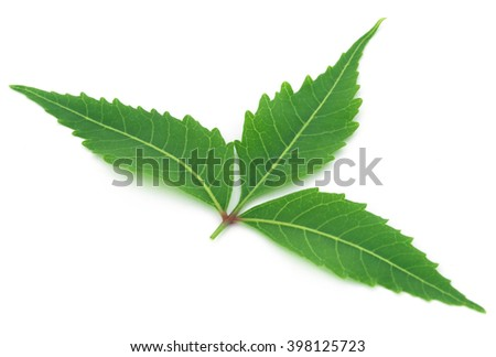 Medicinal neem leaf over white background - stock photo