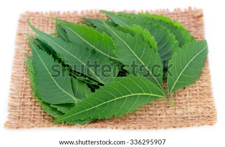 Medicinal neem leaves on a sack over white background - stock photo